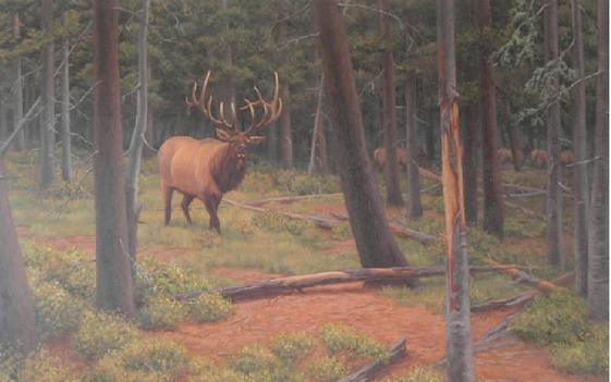 """""""He Came from the Dark Timber"""" Rocky Mountain Bull Elk 18"""" x 24"""" Giclee Print by Gary Kerby"""