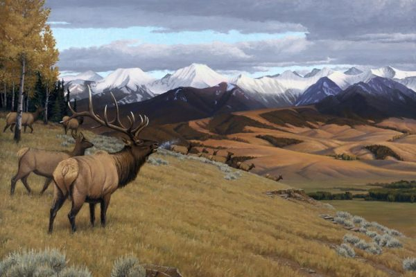 """Rocky Mountain Music Giclee Print 18"""" X 24"""" - Bull Elk on a frosty fall morning"""
